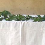 잔지바르, 인도양에서의 새 사도 삶  (잔지바 회중)